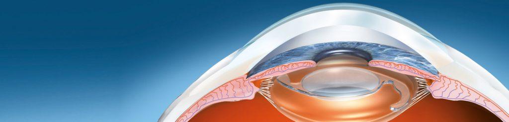 Das Auge - Schema